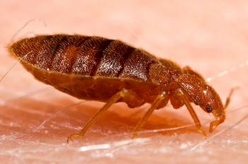 Bed Bugs Coeur D' Alene, ID